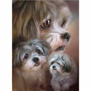 Beautiful Cute Dogs