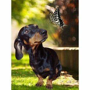 My Friend Butterfly - Cute Dog
