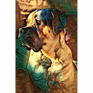 Why so sad? - Dog