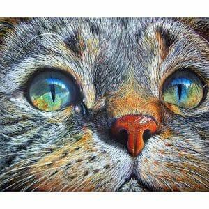 Beautiful Cat's Eye