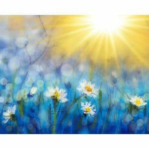 Sunrise And White Flowers