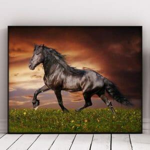 Running Black Horse