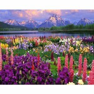 Beautiful Lake And Flower