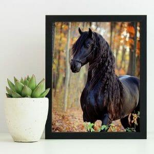 Black Beauty - Horse