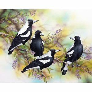 Beautiful Magpie Birds