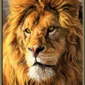 I am serious - Lion