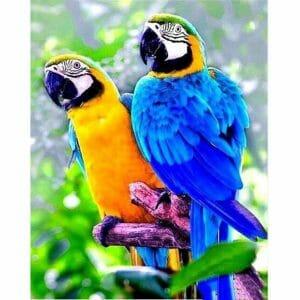 The Friends - Parrot